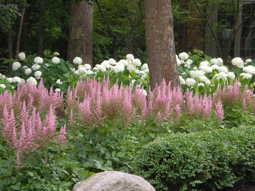 Astilbe Landscaping Garden Ideas