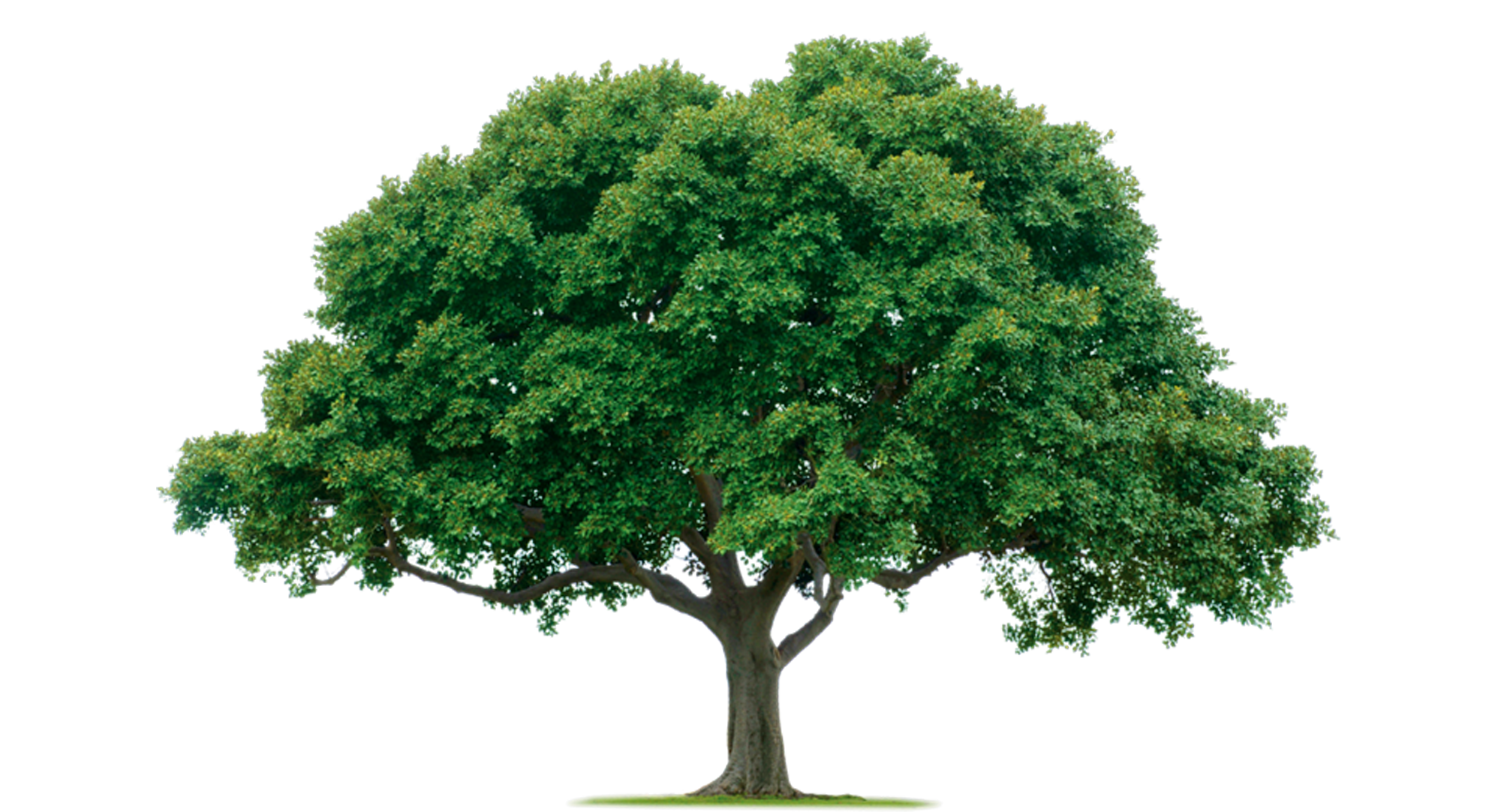 image regarding Printable Trees called Printable Tree Backgrounds Shared Through: Tom 07-08-2013 Do-it-yourself