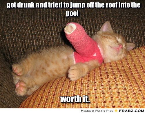 Funny Cat Meme Generator : Got drunk and tried to jump off the roof into the pool get well