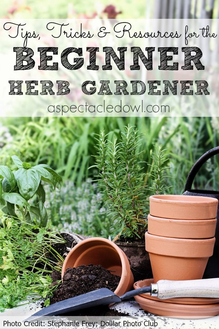 Tips Tricks Resources To Grow Your Own Herb Garden
