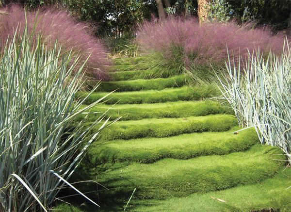 20 landscaping ideas using grass plants home design lover