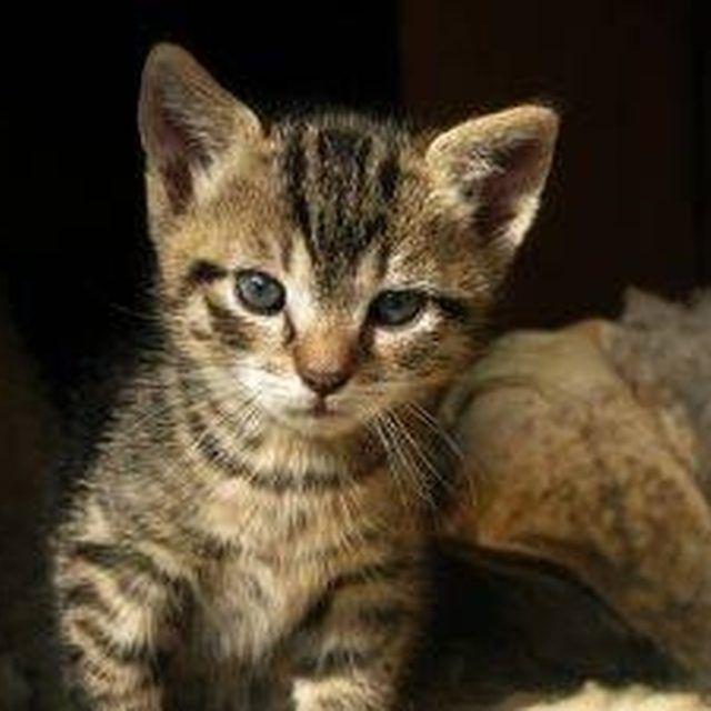 Pin By Lim Sze Ly On Szely Cat Fleas Cat Flea Collar Fleas