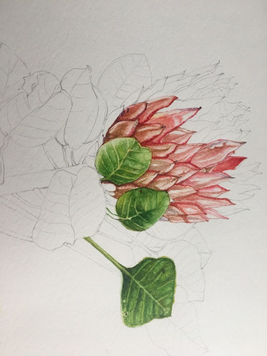 Watercolor Botanical Painting Tutorial Painting Watercolour