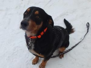 Bruster Is An Adoptable Shepherd Dog In Appleton Wi My Name Is