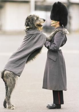 PORTRAIT, UK. An Irish guard in uniform with mascot Irish Wolfhound, also in uniform - Come on smile!!!!