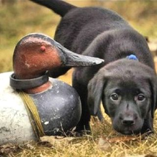 Perfect for duck season