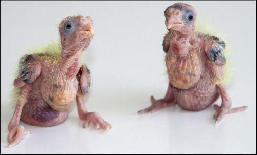 dit zijn Bella en Sammy toen ze nog klein waren