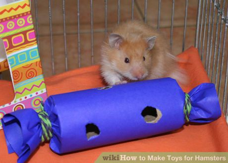 Make Toys For Hamsters Hamster Toys Diy Hamster Toys Cute Hamsters