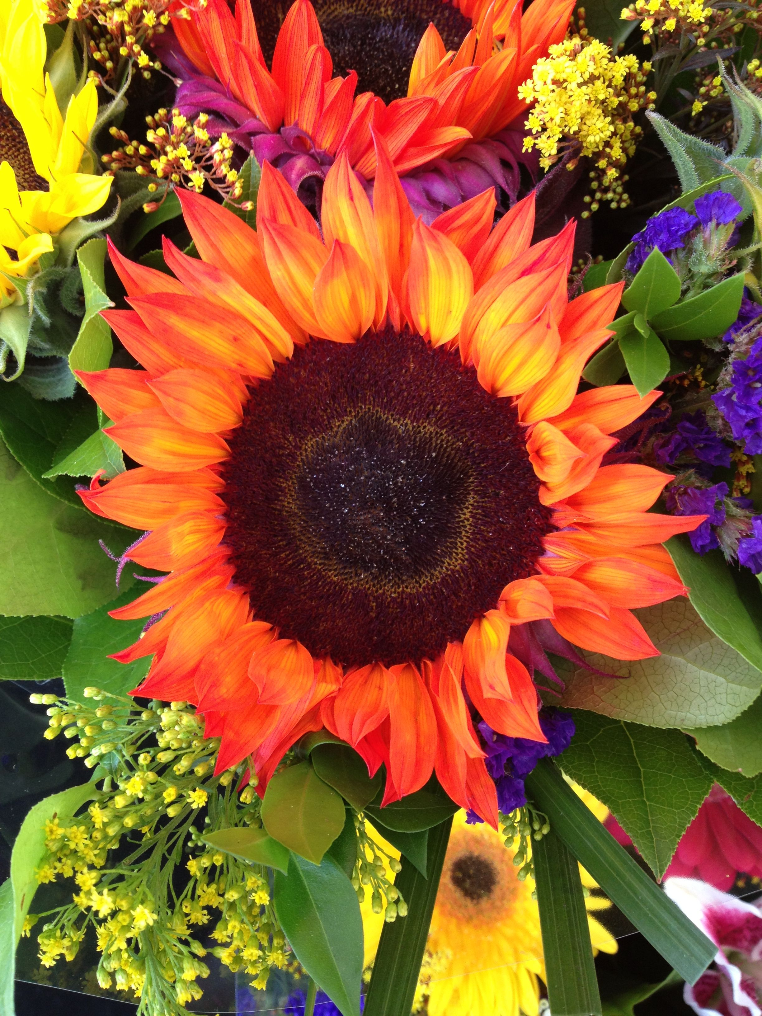 Most beautiful sunflower I\'ve ever seen. Love the different colors ...