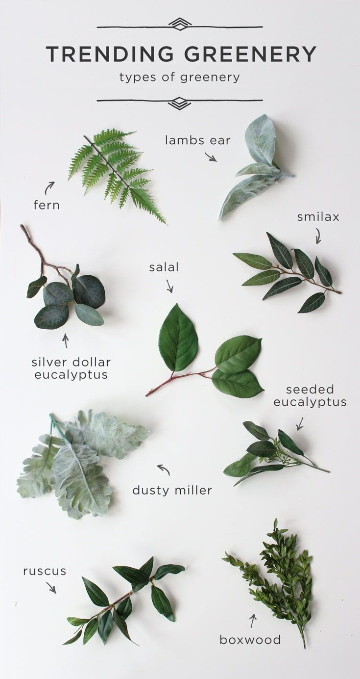 Amazing Greenery & Botanical, Laub & Kräuter Garten natürliche Hochzeit Dekor! Perf … – Papier Kunst