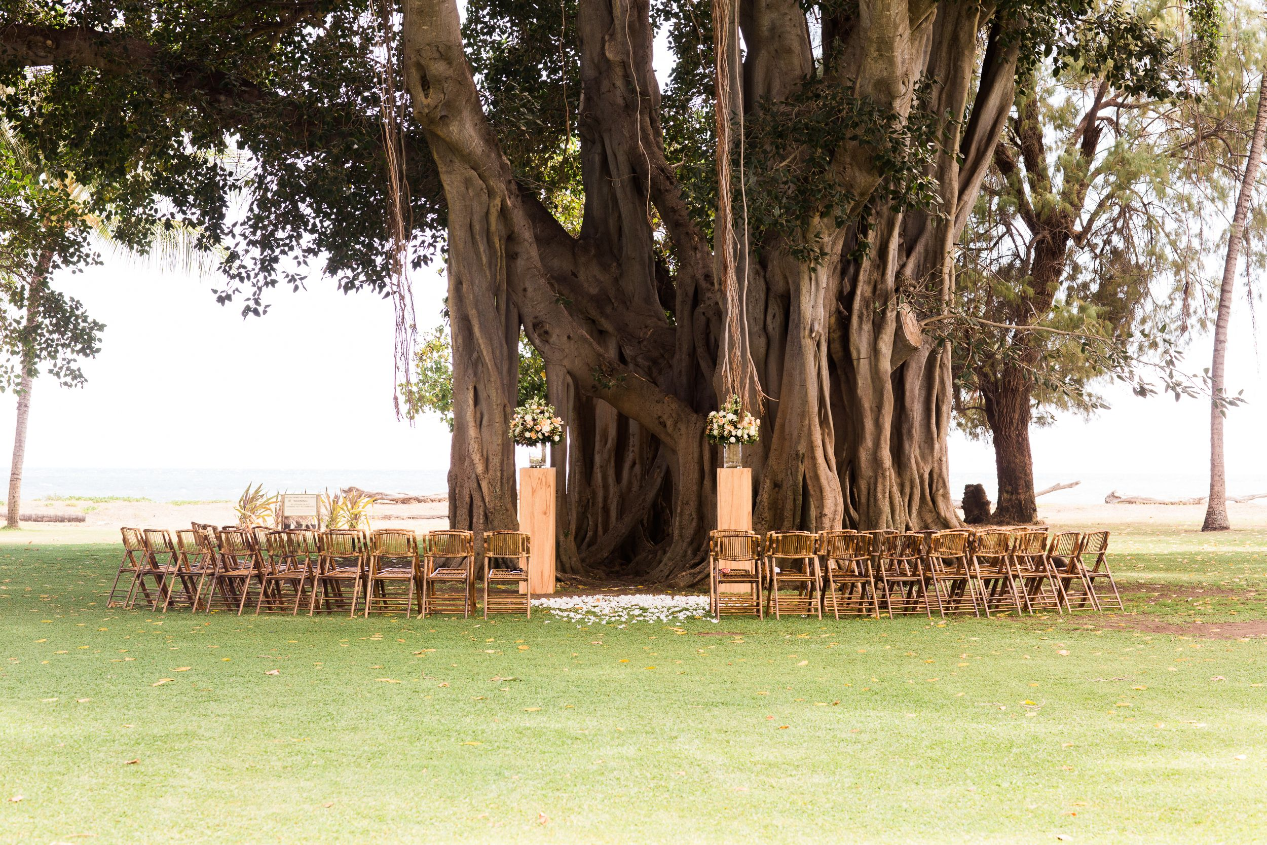 bamboo folding chairs wedding toddler high chair australia banyan tree background with at