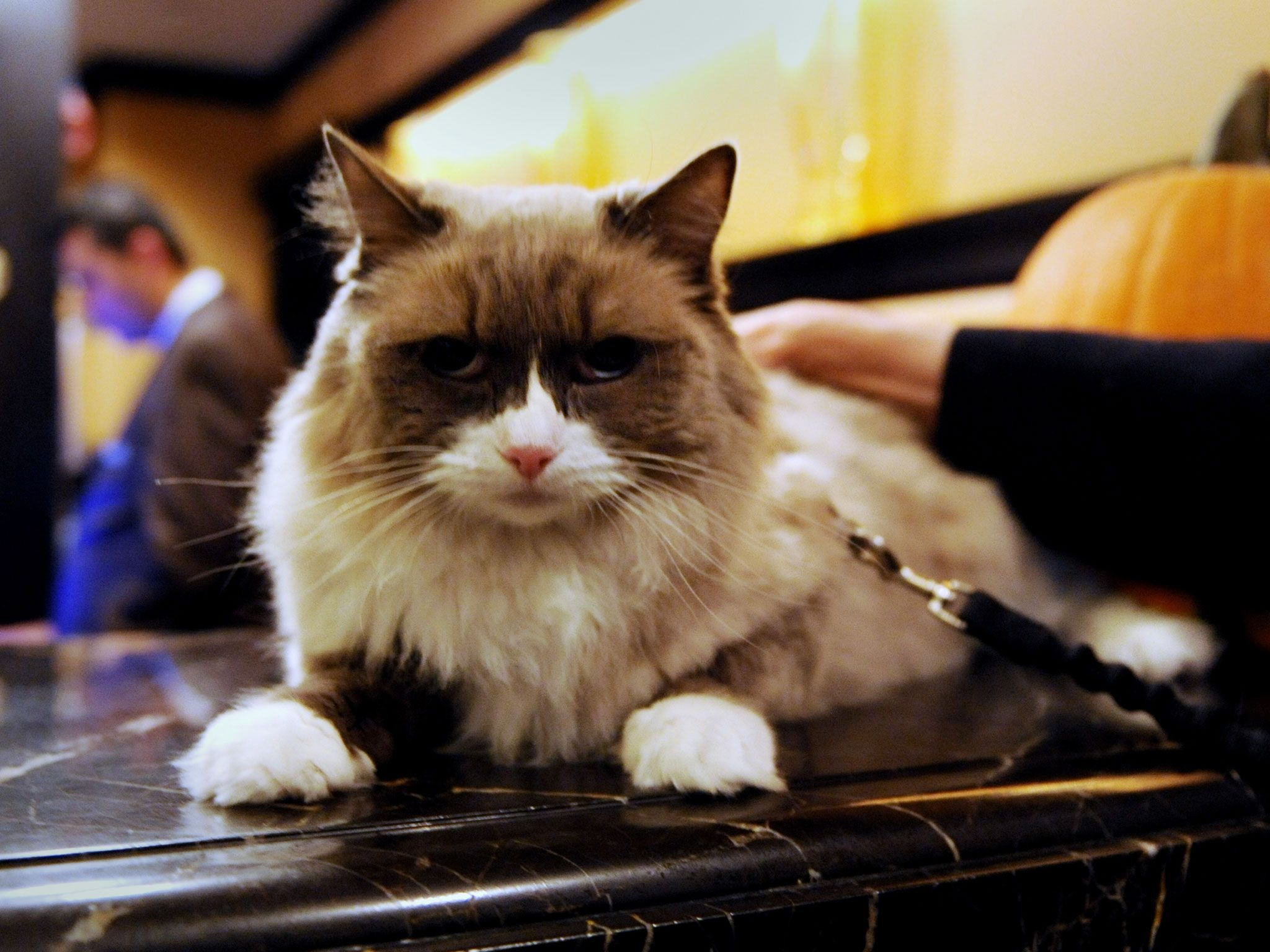 """The Algonquin Hotel's """"Cat Wrangler"""" Might Have the World"""