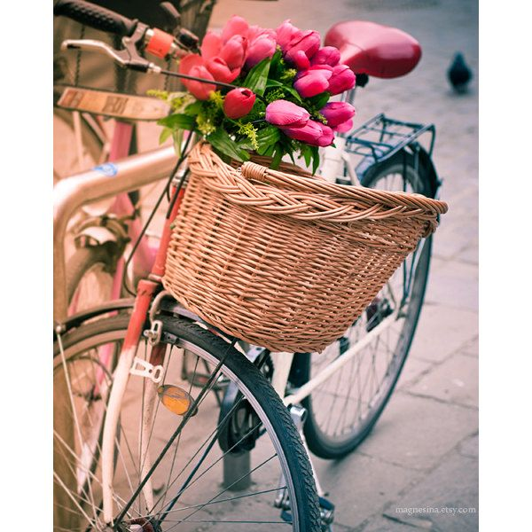 Spring Arrived Flower Nature Photography 8x10 (20x25cm) beautiful floral print for spring home decor bike bicycle travel. $14.00, via Etsy.