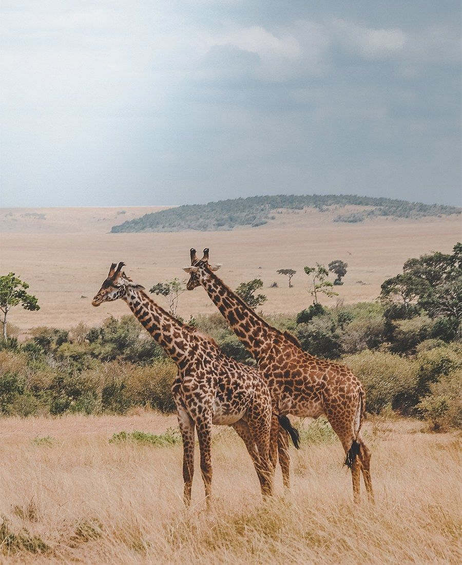 A Beginner's Guide To Planning An African Safari