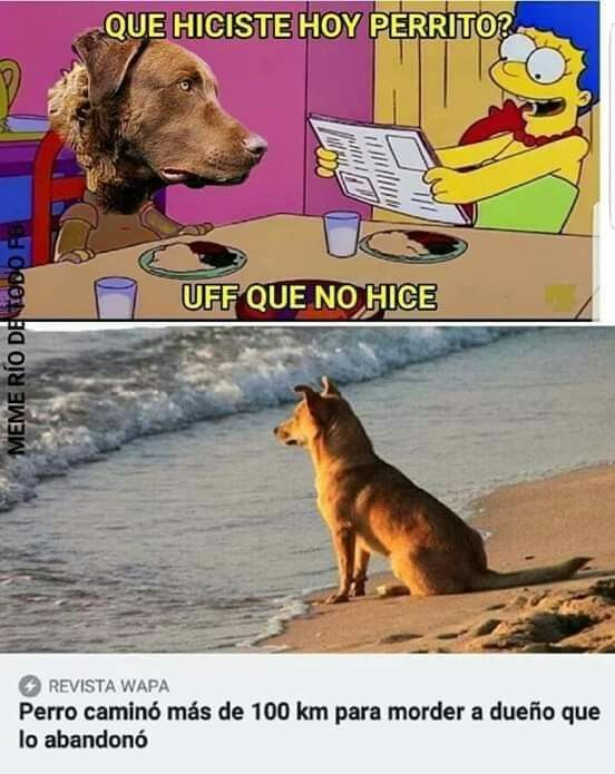 Buen Perro Memes Divertidos Memes Memes Graciosos