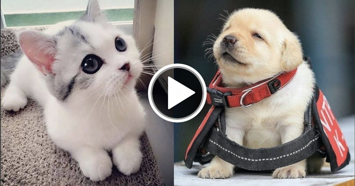 Cutest Baby Dog And Cat Cute And Funny Dog Videos Compilation 2 Funny Dog Videos Cute Baby Dogs Baby Dogs