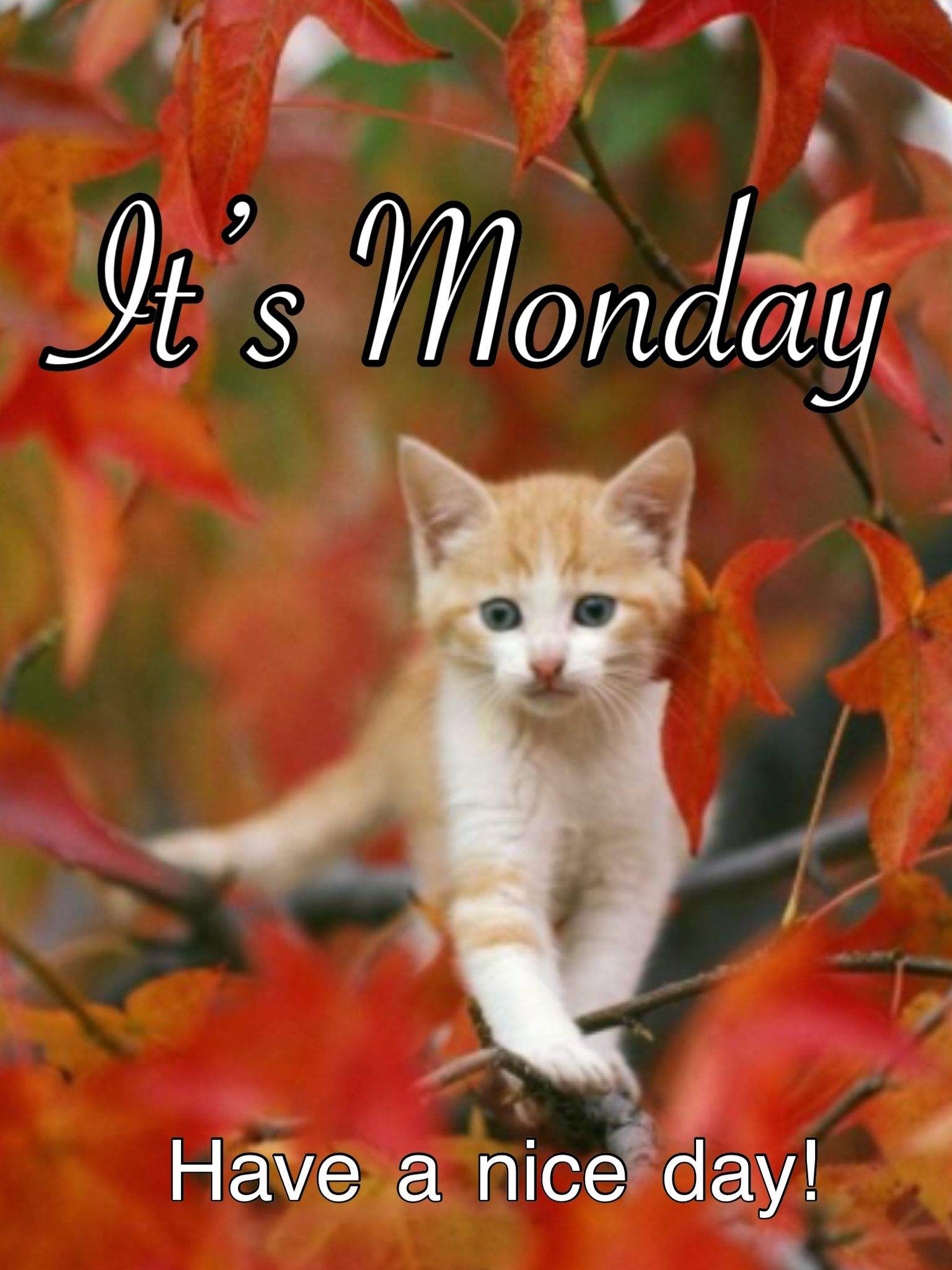 Monday Happy Monday Quotes Monday Quotes Good Night Love Messages