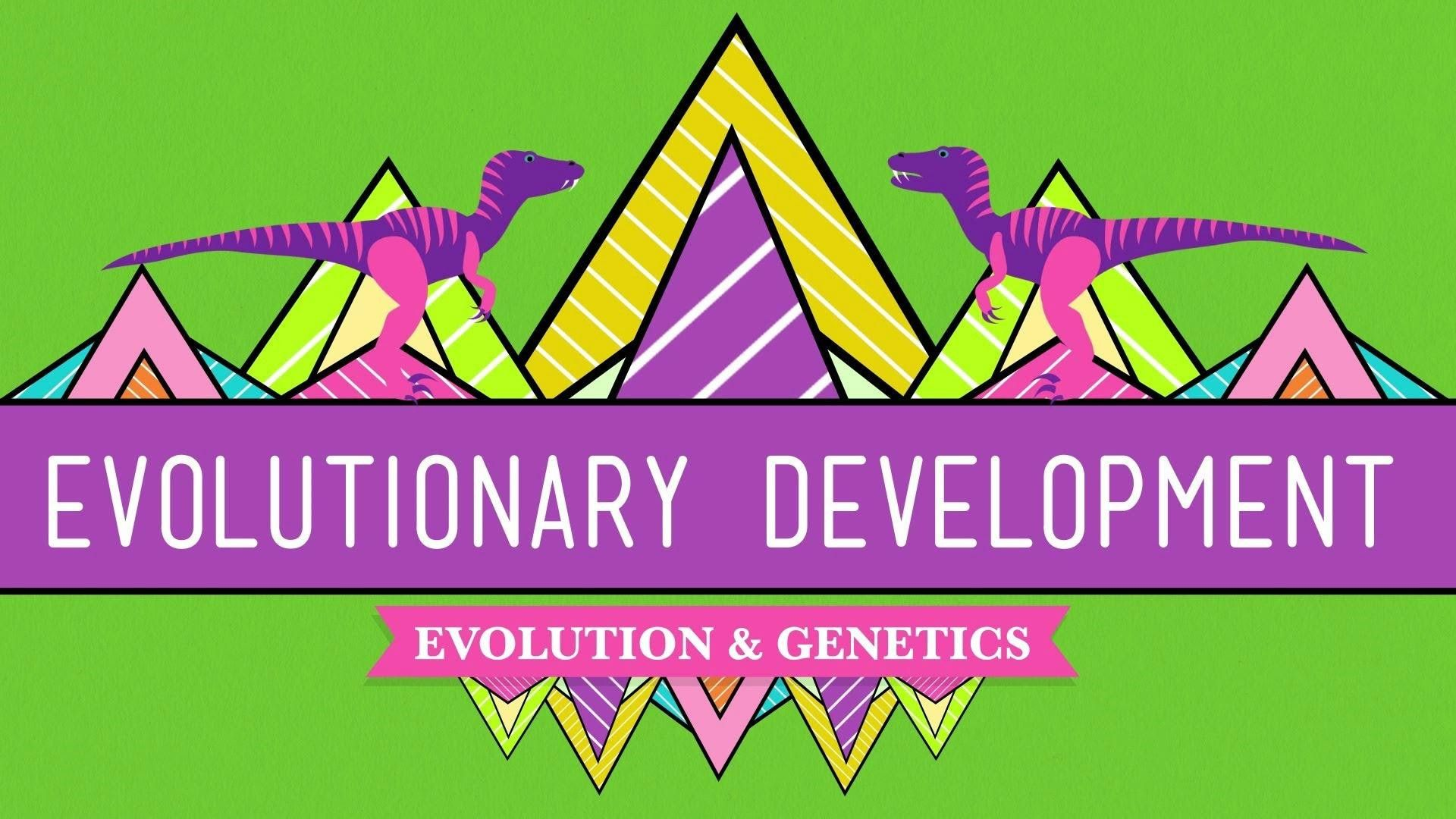 Accomplishedofficial Evidence Of Evolution Worksheet