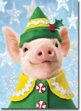 Pig Elf Funny Boxed Christmas Cards - 10 Greeting Cards by Avanti Press