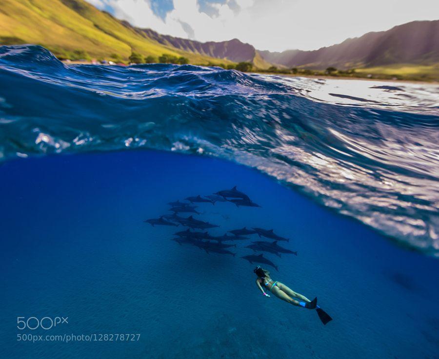 Mauka To Makai By Shane Brown16 Animals Pets Fadighanemmd Underwater World