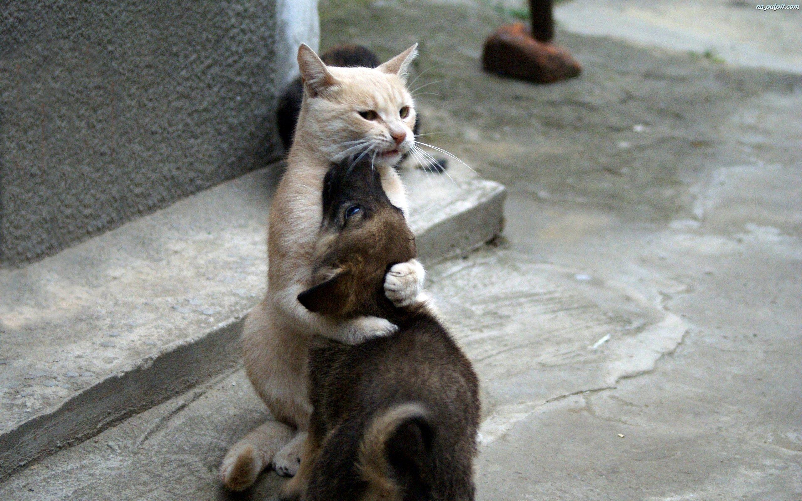 Kot Pies Na Pulpit Cat hug, Animal humor dog, Animal hugs