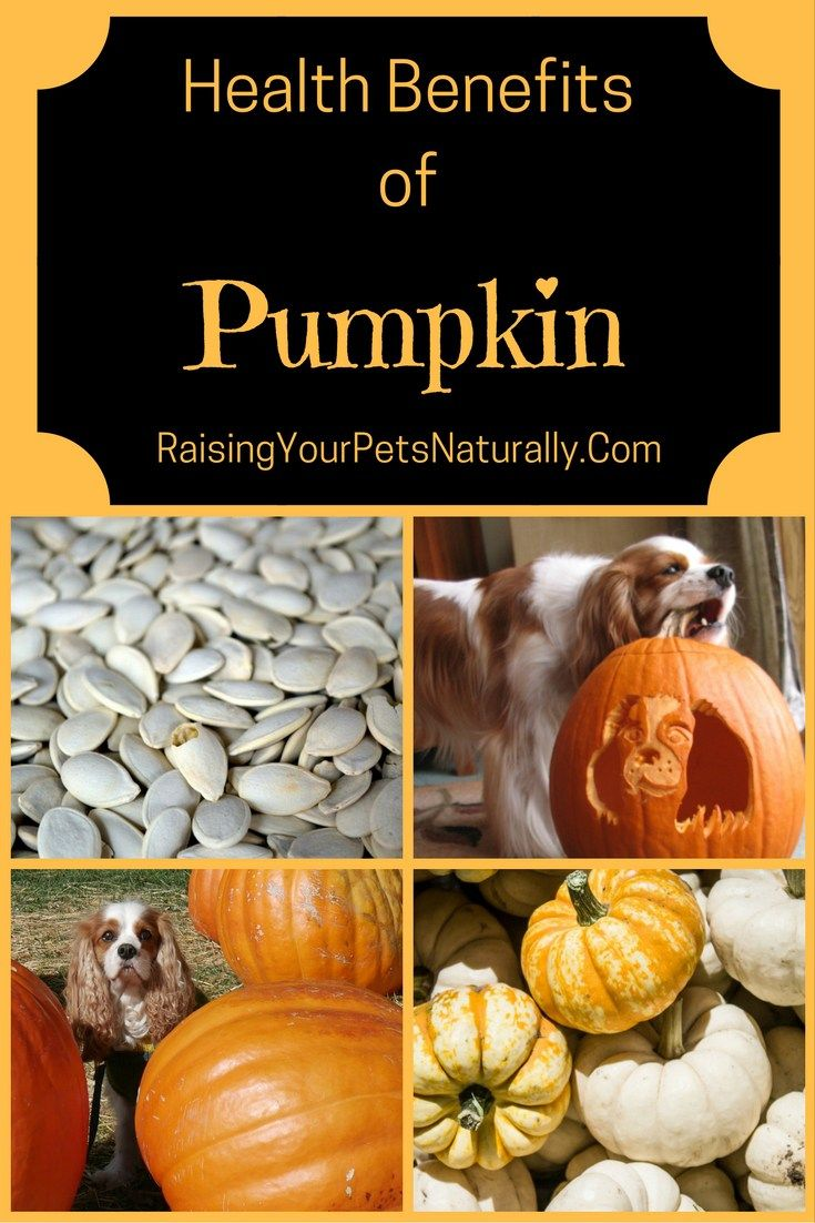 is pumpkin healthy for dogs