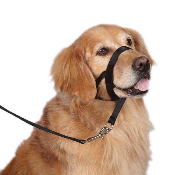 Head Collar Usa Seller 4 Sizes Guardian Gear Dog Training No