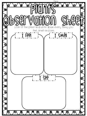 Plant Observations | Classroom Freebies! | Science classroom