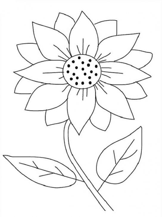 Printable Sunflower Coloring Page  Fun Coloring Pages  Pinterest