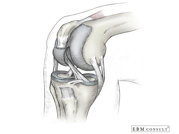 Knee Bone and Ligament Anatomy | Anatomy Images | Pinterest | Knee bones