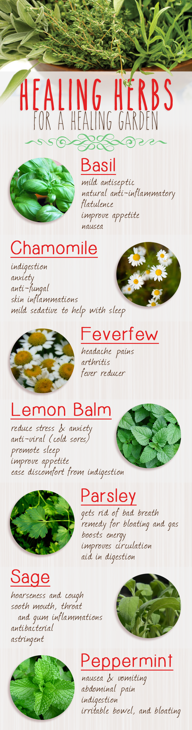 Medicinal Plants and Herbs