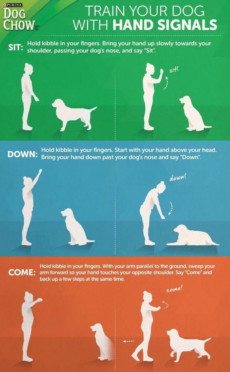 Pin On Training Pets