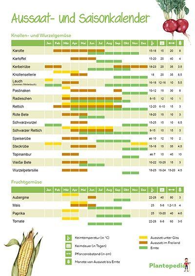 Aussaatkalender 2018/2019 - der Pflanzkalender für Gemüse - Plantopedia.de #kräutergartenpalette