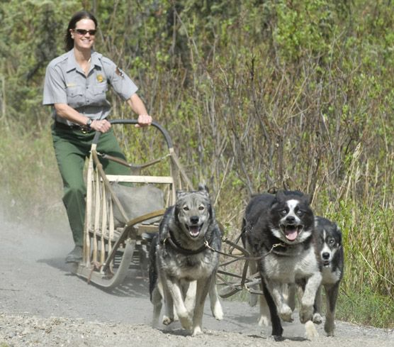 Image result for dog sledding summer ak denali