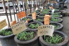 #AgriculturaUrbana Perfectamente las cubiertas de autos sirven como espacios de cultivos.
