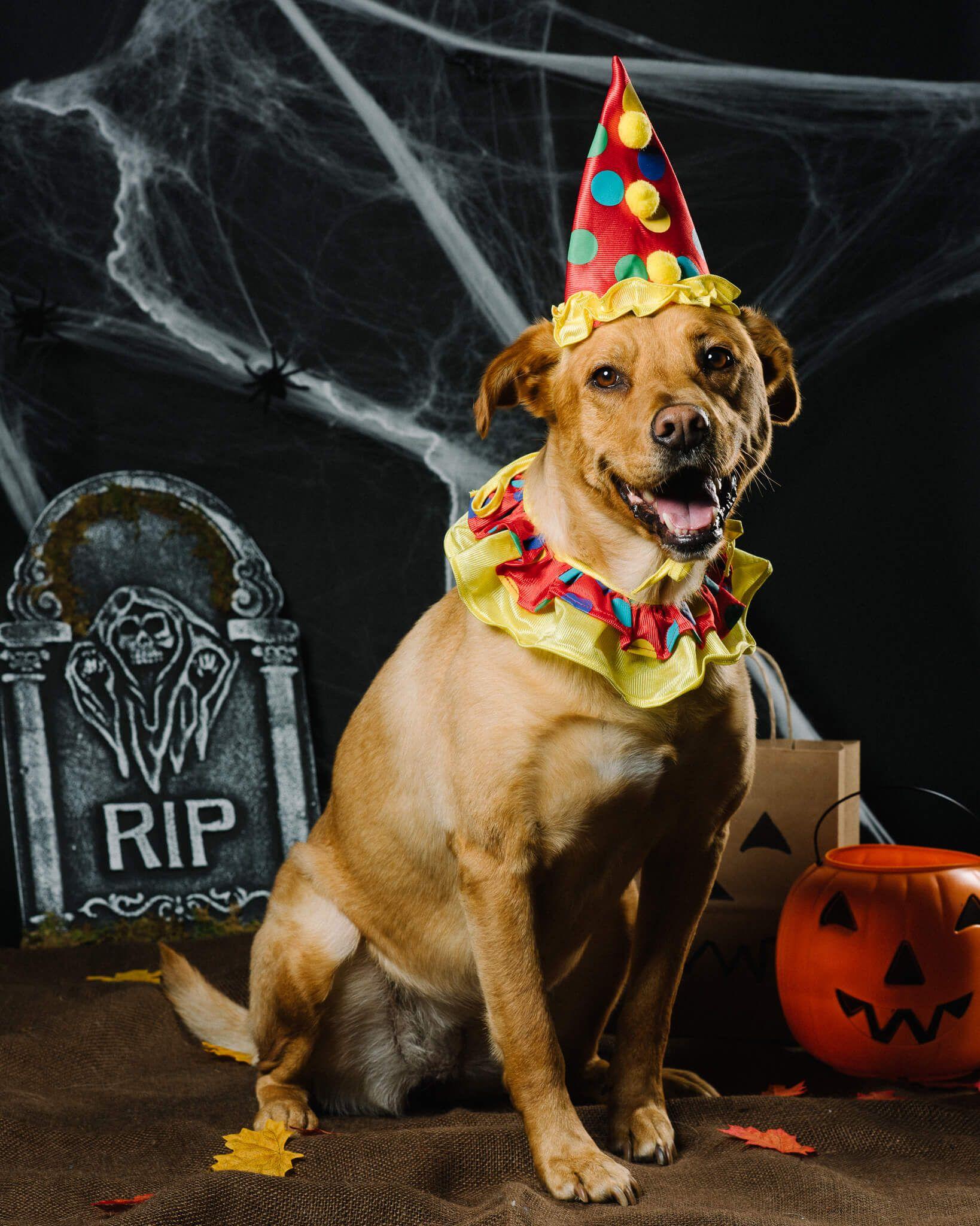 Happy HowlOWeen Top 10 Halloween Costumes DogVacay