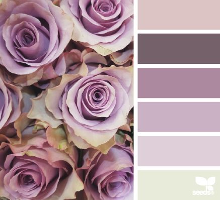 Rose tones decorating with color pinterest rose color inspiration and color pallets - Mauve wandfarbe ...