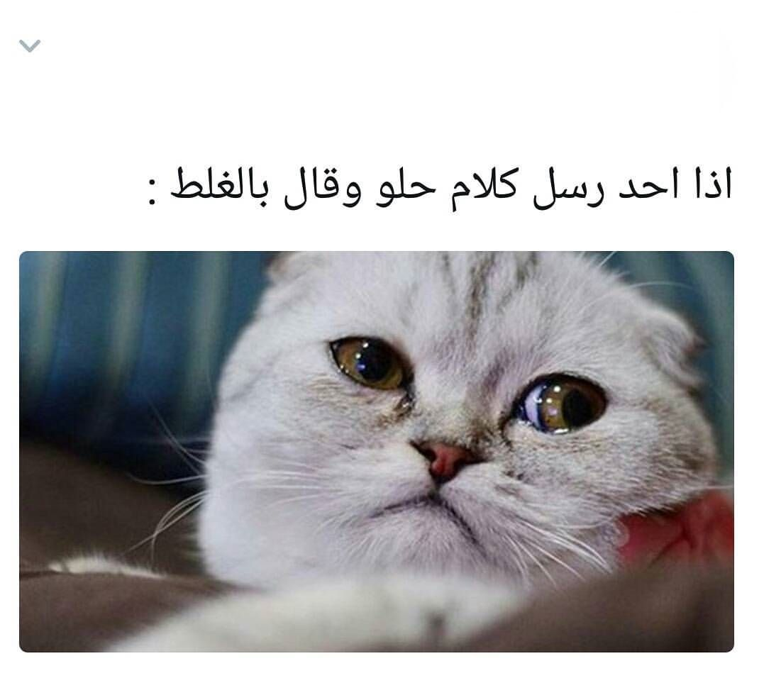 Pin By Mira Ma On هاهاهاها Friend Anime Relationship Goals Pictures Arabic Funny
