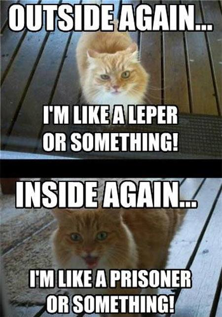 Inside Outside Cat Meme Slapcaption Com Funny Animal Pictures Funny Cats Funny