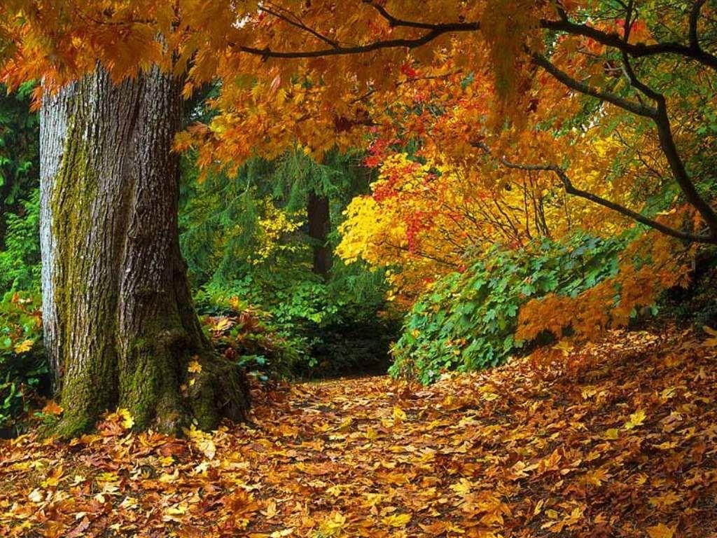 deciduous forest - Google Search | art interests | Pinterest | Paisajes