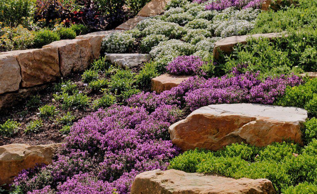 Einen Hang Mit Bodendeckern Bepflanzen So Gehen Sie Vor Bodendecker Garten Landschaftsbau Garten
