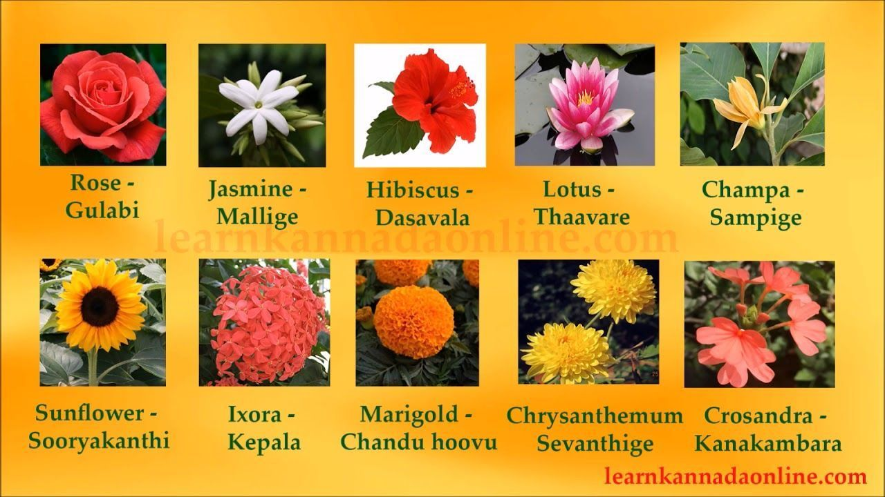 Awesome Flowers Name In English With Kannada Meaning And