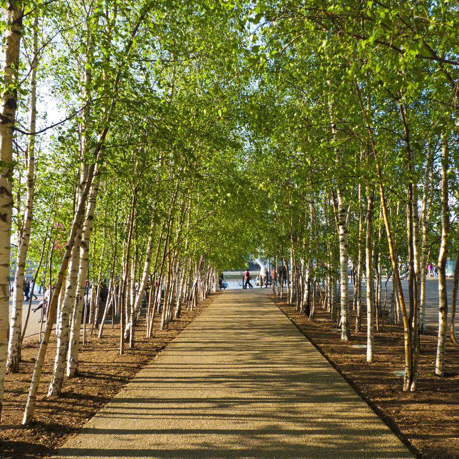 Tate Modern Birches Dg Paisajes Bosque Paisajes Con Arboles