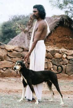 Know Our Own Dog Breeds Kombai Kanni Alangu Chippiparai And