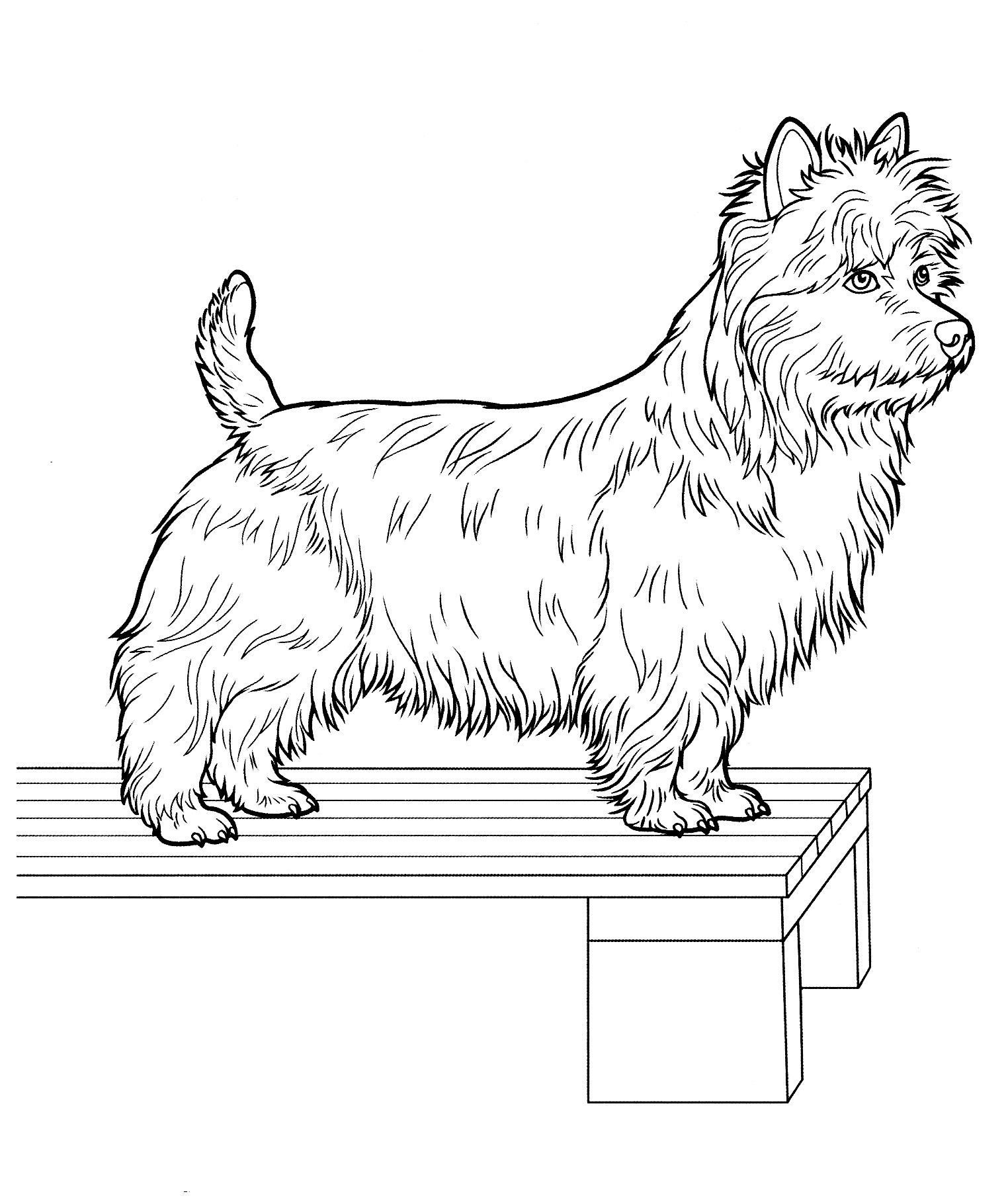 dog_coloring_pages_23 Teenagers coloring pages | dogs to color ...