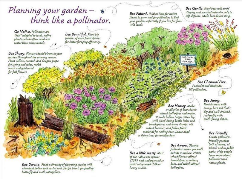 Planning Your Garden Think Like A Pollinator Via Irish Wildlife Trust Https Www Facebook Co Pollinator Garden Pollinator Garden Design Bee Friendly Garden