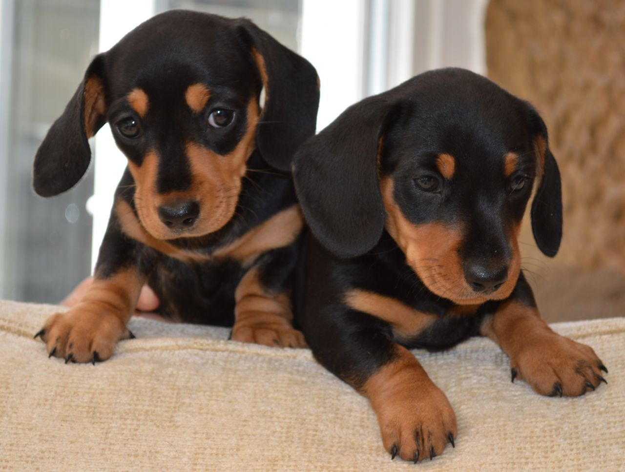 10 Interesting Facts About Dachshunds Dog names