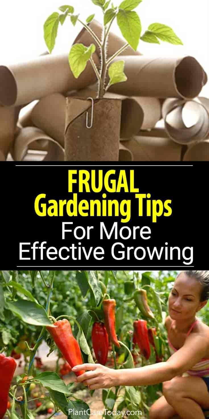10 Frugal Gardening Tricks For More Effective Grow