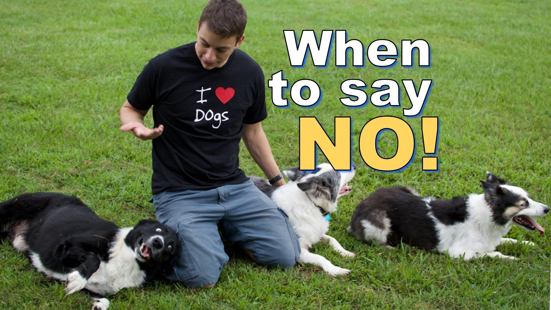 Is It Ok To Say No To Your Dog How And When I Say No To My Dogs