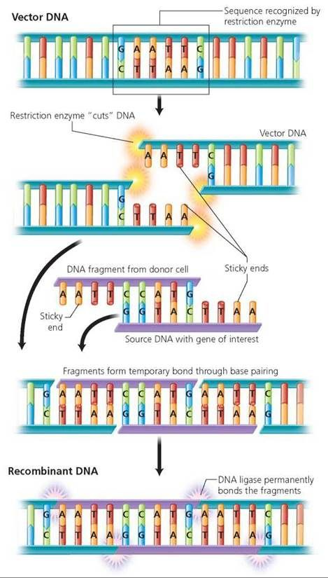 Dna And Biotechnology Biology Of Humans Biotechnology Study Biology Biology Notes
